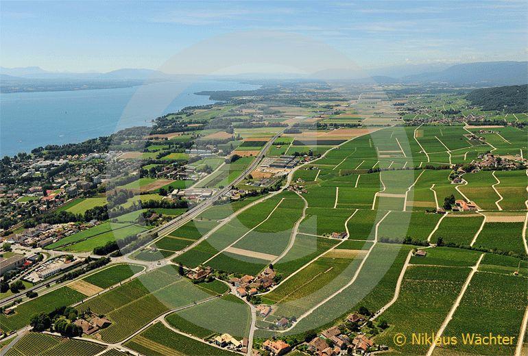 Foto: Weinberge am Genfersee bei Rolle VD. (Luftaufnahme von Niklaus Wächter)