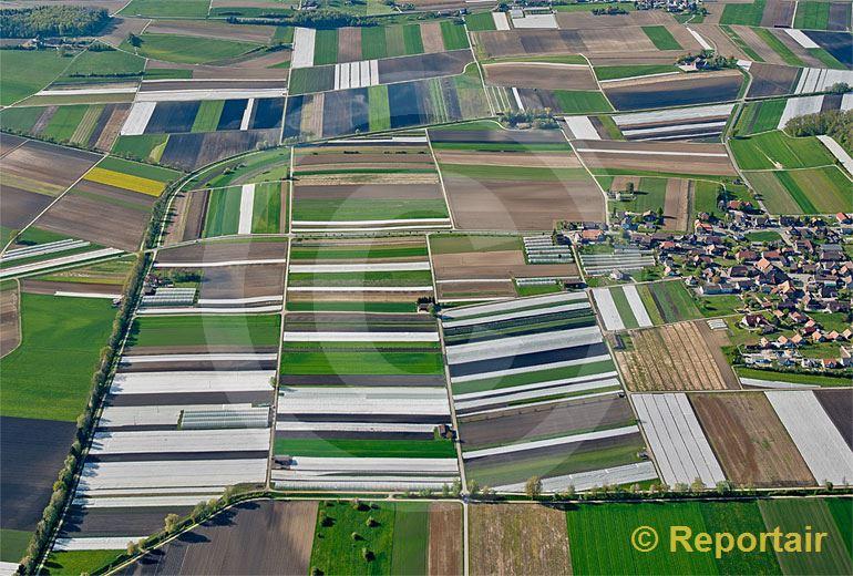 Foto: Grosses Moos im Berner Seelandes.. (Luftaufnahme von Niklaus Wächter)