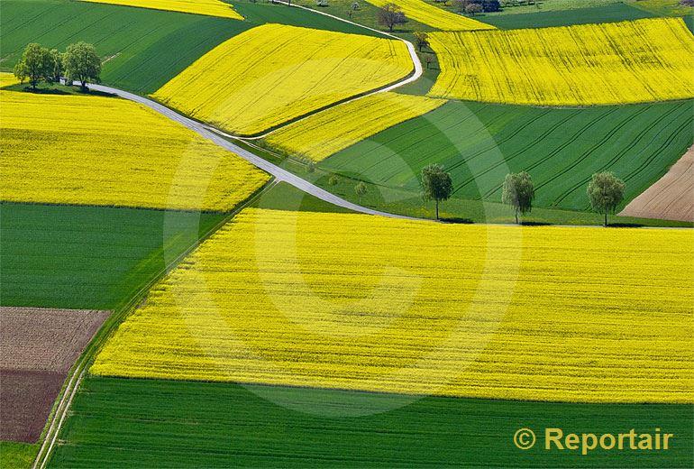 Foto: Rapsfelder im Klettgau bei Schaffhausen.. (Luftaufnahme von Niklaus Wächter)