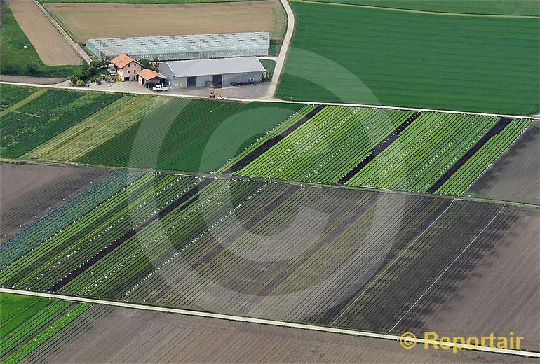 Foto: Gemüse-Hof im Grossen Moos bei Kerzers FR.. (Luftaufnahme von Niklaus Wächter)