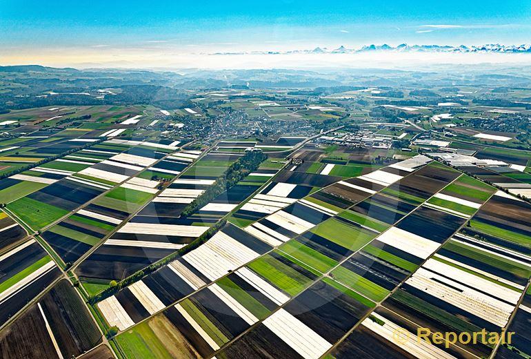 Foto: Im Grossen Moos bei Kerzers FR schützen Gemüsebauern ihre Felder vor der Kälte. (Luftaufnahme von Niklaus Wächter)