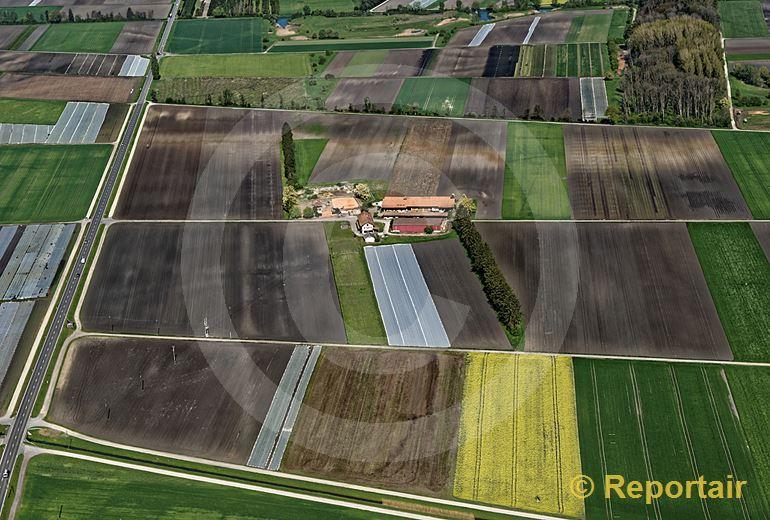 Foto: Feldermosaik im Grossen Moos bei Treiten BE. (Luftaufnahme von Niklaus Wächter)