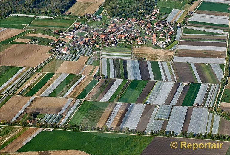 Foto: Treiten BE im Grossen Moos.. (Luftaufnahme von Niklaus Wächter)