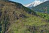 Foto 49: Ein Bergwald oberhalb Visp VS fünf Jahre nach seinem Feuertod.