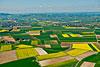 Foto 359: Die Rapsfelder im sogenannten Klettgau bei Schaffhausen erzeugen einen farbenfrohen Landschaftsteppich...